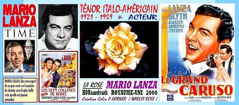 rose-mario-lanza-horaardvark-celebrites-roses-passion.jpg