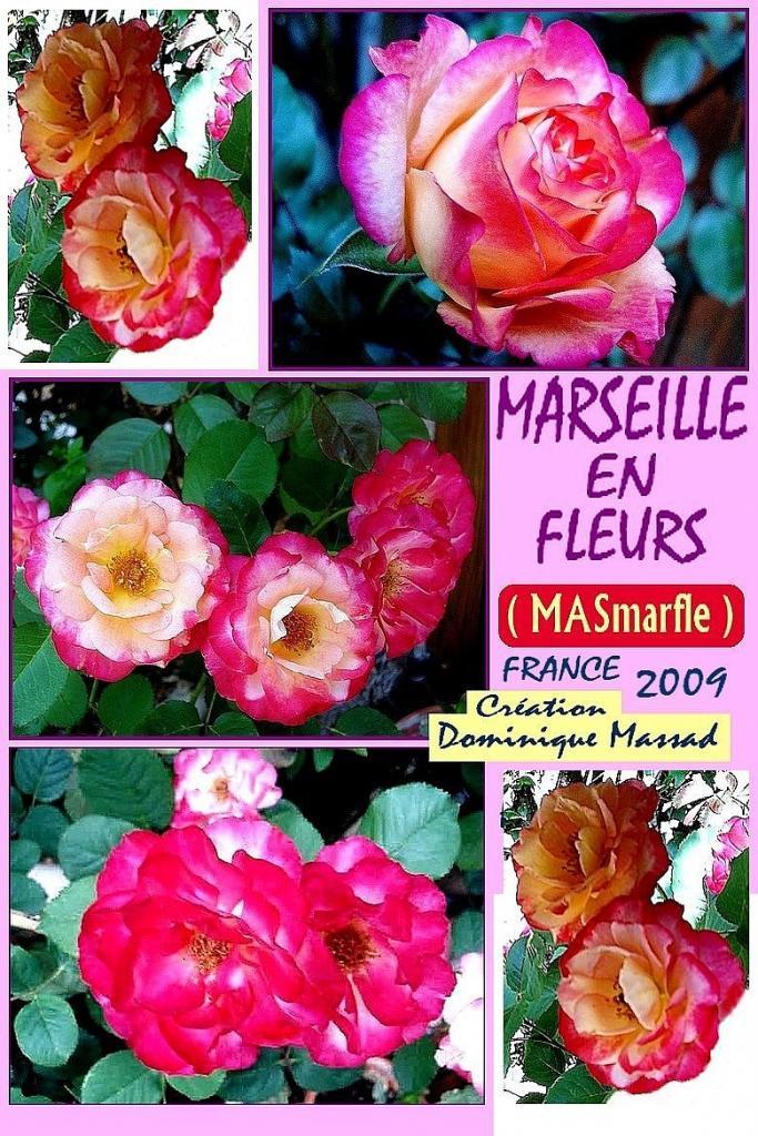 rose-marseille-en-fleurs-masmarfle-creation-dominique-massad-roses-passion-3.jpg
