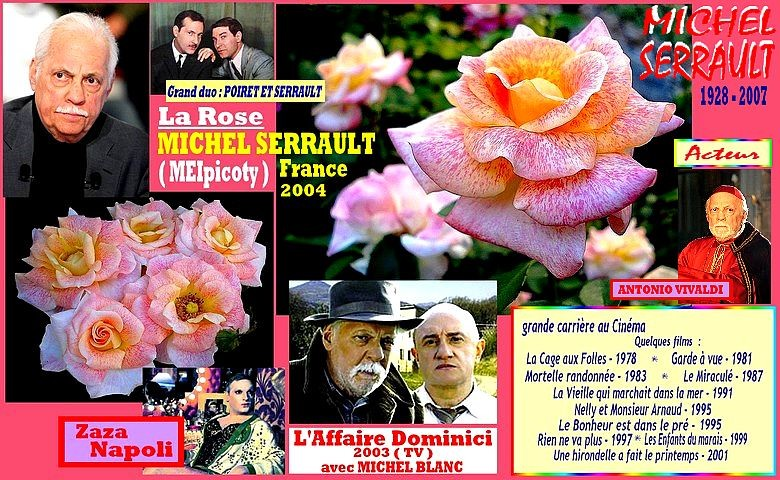 rose-michel-serrault-meipicoty-celebrites-meilland-roses-passion.jpg