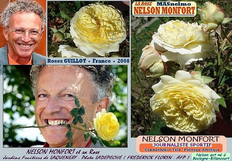 Rose nelson monfort malnesmo guillot france 2008 roses passion