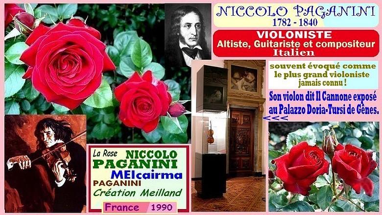 Rose niccolo paganini meicairma paganini meilland france 1990