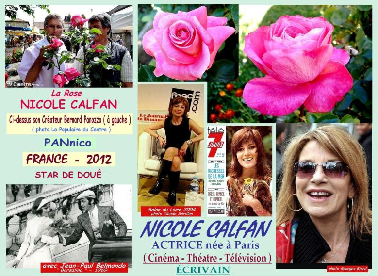 Rose nicole calfan pannico bernard panozzo france roses passion