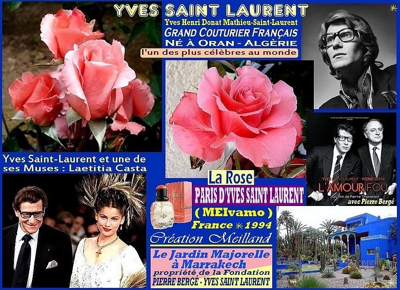 Rose paris d yves saint laurent meivamo meilland france 1994