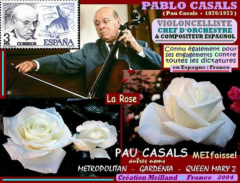 Rose pau casals meifaissel metropolitan gardenia queen mary 2 meilland rosespassion