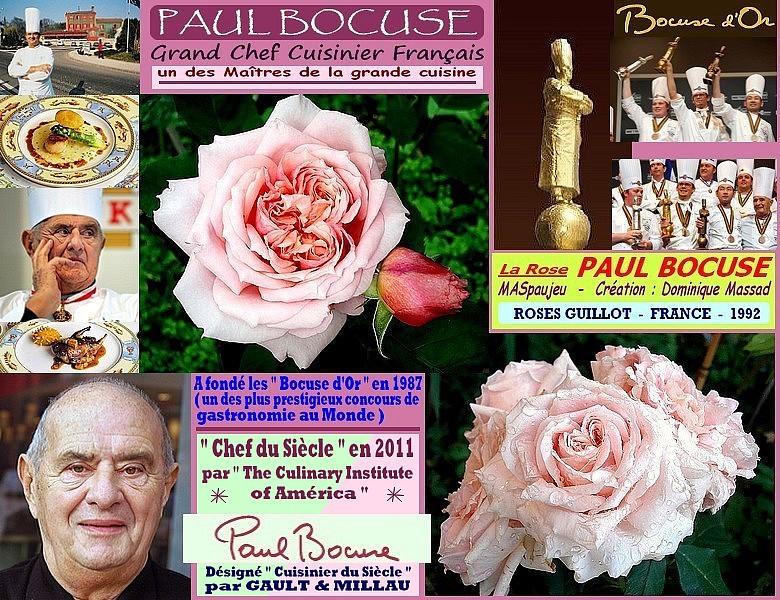 Rose paul bocuse maspaujeu dominique massad roses guillot 1992 rosespassion