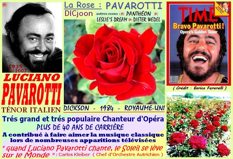 Rose pavarotti dicjoon pantheon leslie s dream dieter wedel dickson 1984 roses passion