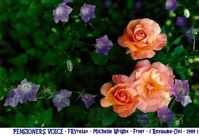 rose-pensioner-s-voice-fryrelax-michelle-wright-fryer-royaume-uni-1989.jpg