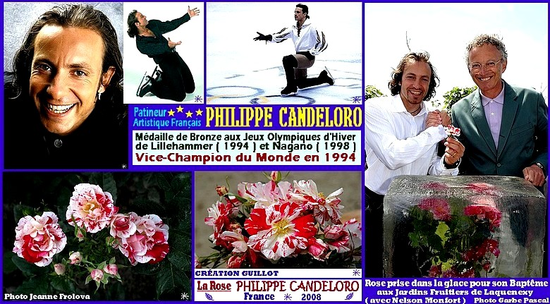 rose-philippe-candeloro-guillot-france-2008-roses-passion.jpg