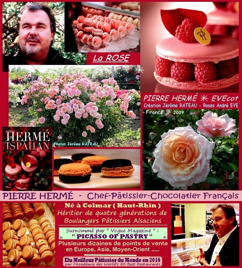 Rose pierre herme evecot jerome rateau roses andre eve france roses passion