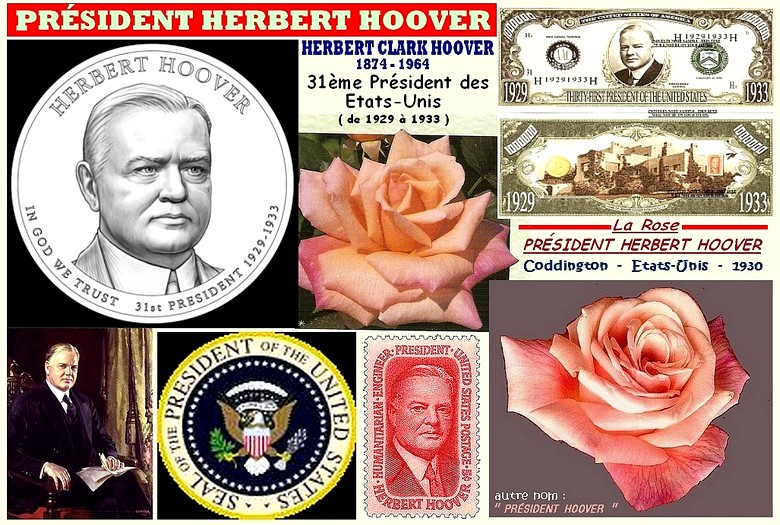 Rose president herbert hoover coddington etats unis 1930 roses passion