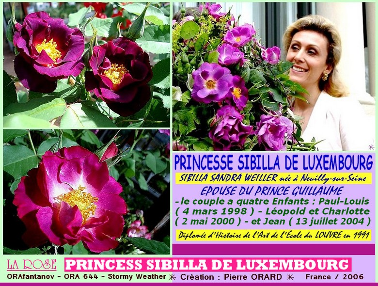 Rose princess sibilla de luxembourg orafantanov ora 644 stormy weather pierrre orard france 2006 roses passion