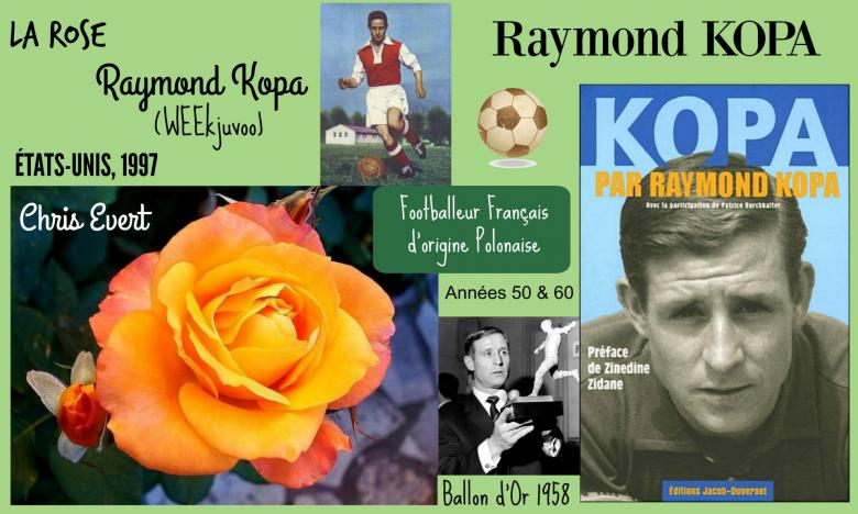 Rose raymond kopa weekjuvoo chris evert tom carruth etats unis 1997 roses passion 2j