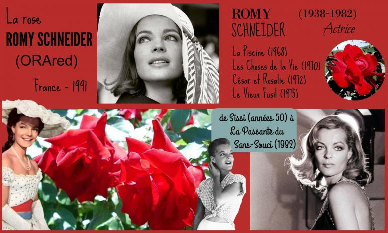Rose romy schneider orared orard france 1991 roses passion 2j