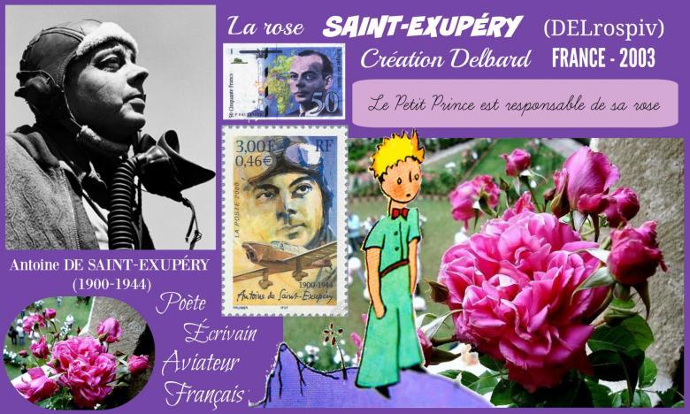 Rose saint exupery delrospiv delbard france 2003 roses passion 2j