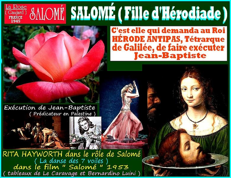 rose-salome-celebrites-jean-marie-gaujard-roses-passion.jpg