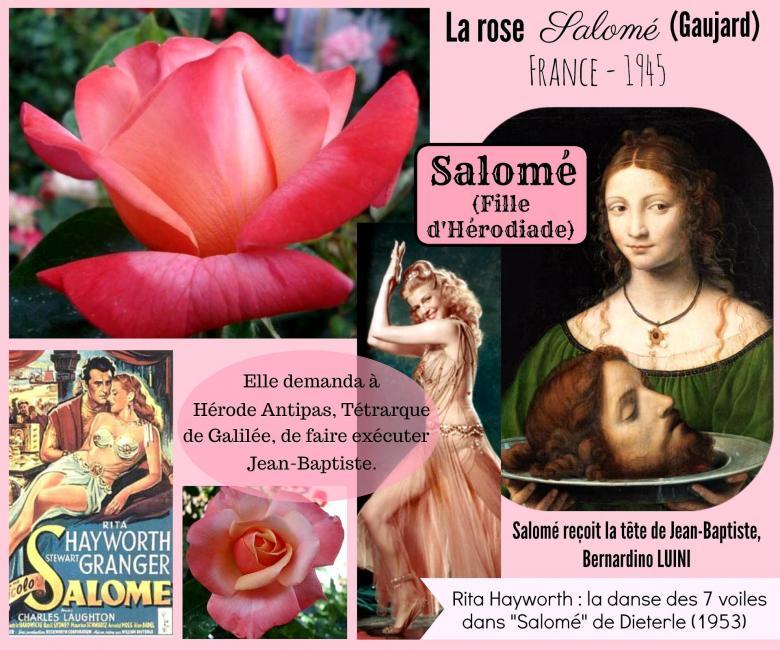 Rose salome gaujard celebrites roses passion