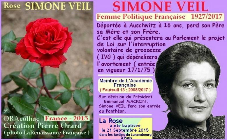 Rose simone veil oracolhac orard france 2015 roses passion 1