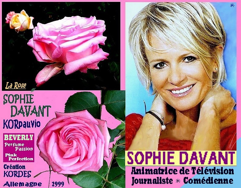 rose-sophie-davant-korpauvio-beverly-perfume-passion-pink-perfection-kordes-1999.jpg