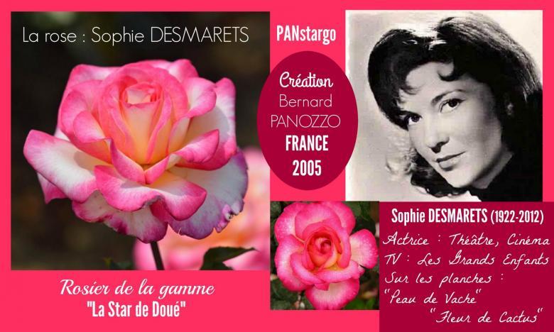 Rose sophie desmarets panstargo bernard panozzo france 2005 roses passion 2j