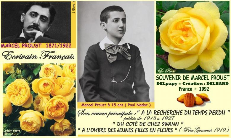 Rose souvenir de marcel proust delpapy delbard france 1992 roses passion