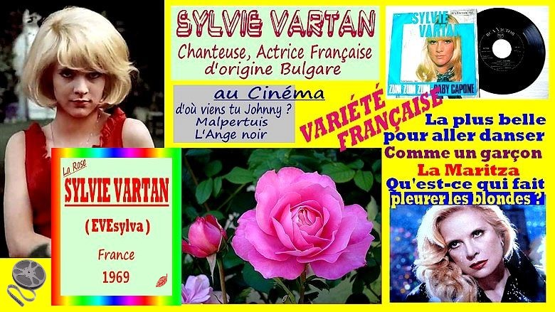 rose-sylvie-vartan-evesylva-celebrites-roses-passion.jpg
