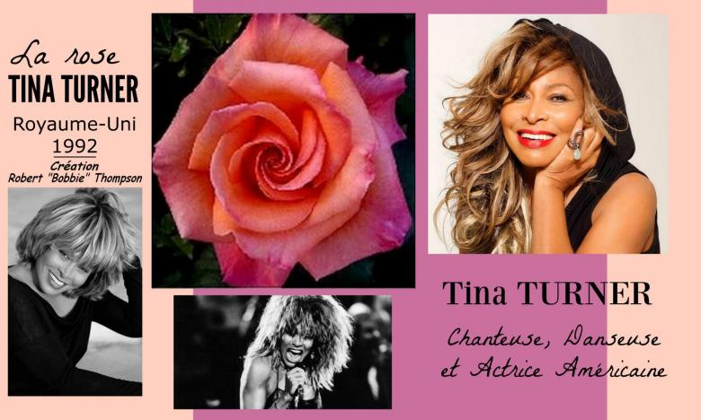 Rose tina turner robert bobbie thompson royaume uni 1992 roses passion 2j