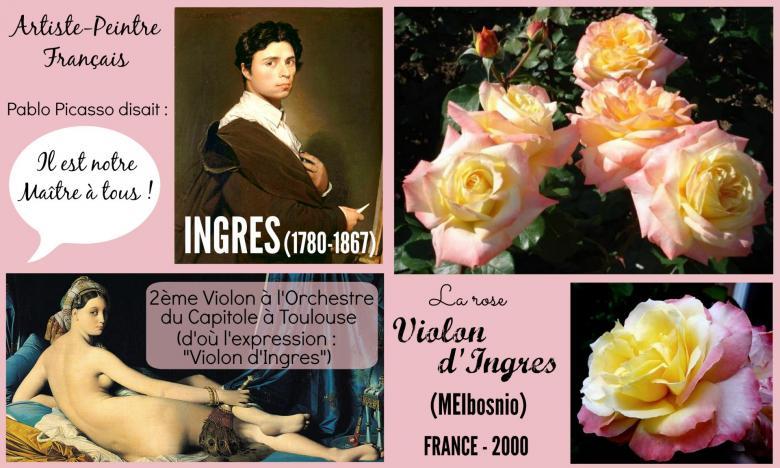 Rose violon d ingres meibosnio meilland france 2000 roses passion 2j