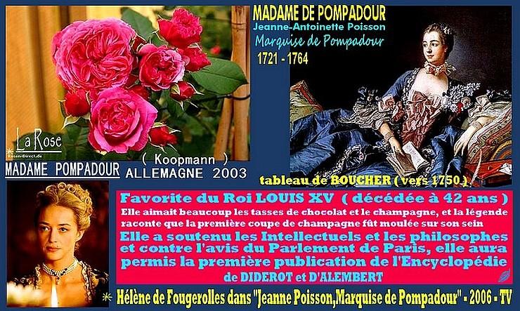 rose-vitalrose-madame-pompadour-celebrites-koopman-madame-de-pompadour.jpg