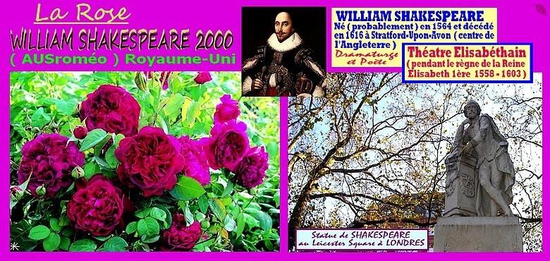 rose-william-shakespeare-ausromeo-celebrites-roses-passion.jpg