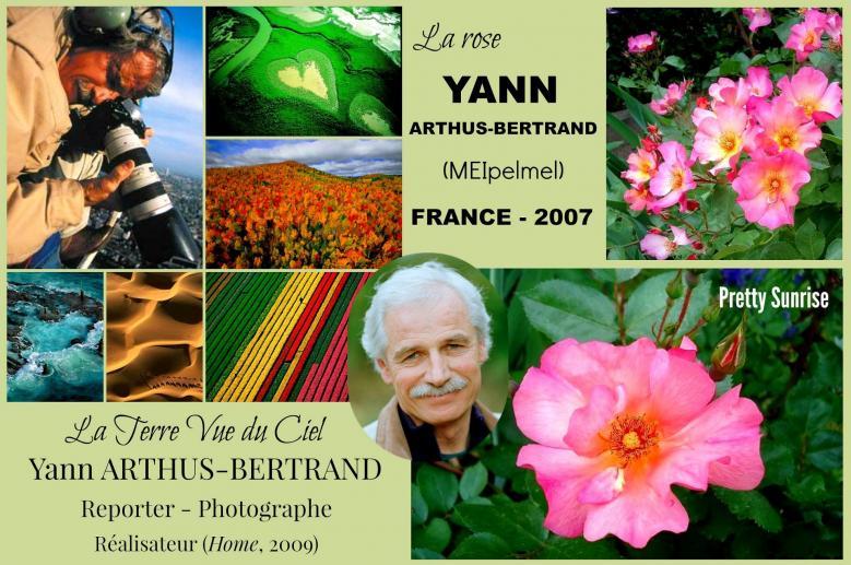 Rose yann arthus bertrand meipelmel pretty sunrise meilland france 2007 roses passion 2 j