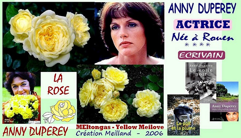 Rose anny duperey meitongas yellow meilove meilland 2006 roses passion