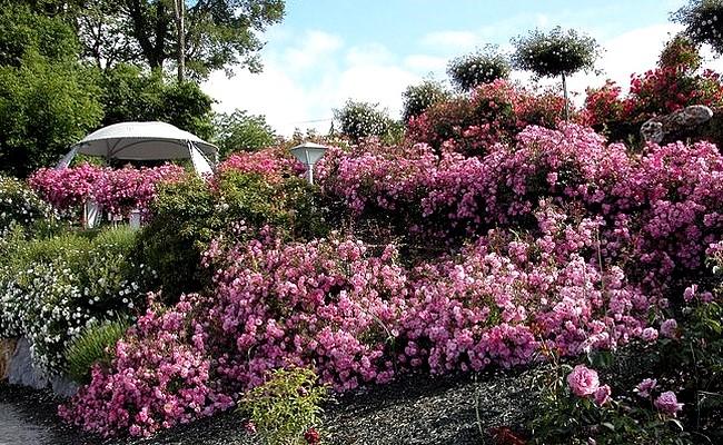 roseraie-de-barbary-4565-1.jpg