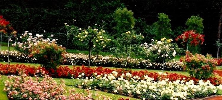 roseraie-du-parc-la-grange-geneve-3.jpg