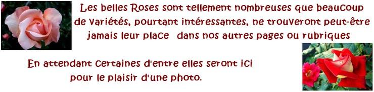 roses-au-hasard-des-jardins-photos-8822.jpg