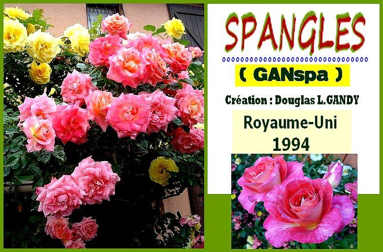 rosesp-spangles-8775.jpg