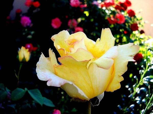 rosesp-vendee-globe-02157-r.jpg