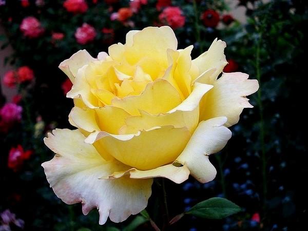 rosesp-vendee-globe-02194.jpg