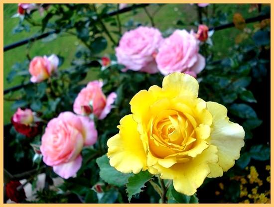 Rosier vendee globe dorvengold dorieux roberto alagna 08362
