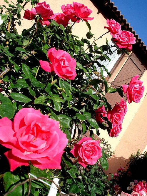 rosy-manon-2261.jpg