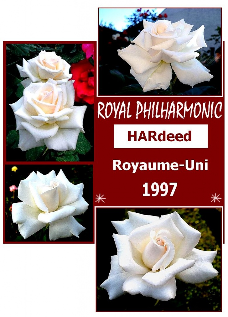 royal-philharmonic-rose-pave-8226.jpg