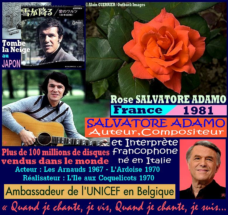 salvatore-adamo-rose-celebrites-roses-passion.jpg