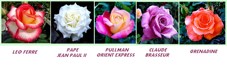 Serie 11 roses leo ferre pape jean paul ii pullman orient express claude brasseur grenadine
