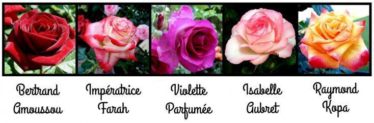 Serie 6 bertrand amoussou imperatrice farah violette parfumee isabelle aubret raymond kopa
